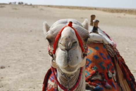 Smart Camel