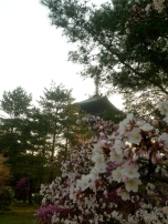 5-Storied Pagoda behind the cherry blossoms